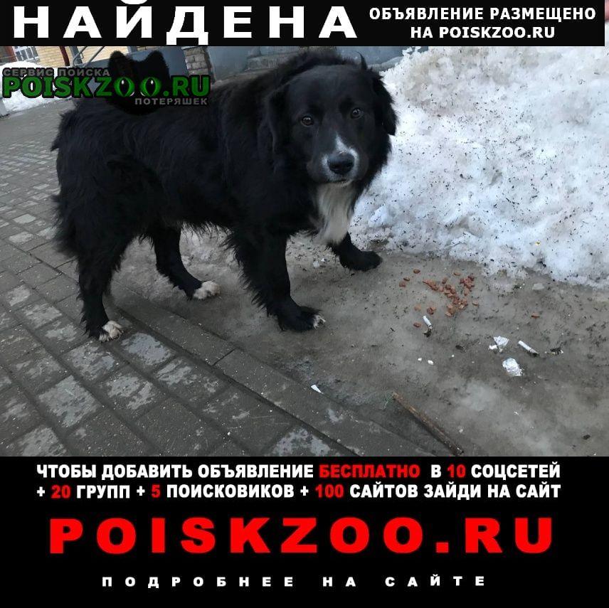 Найдена собака гуляет по двору без ошейника Королев