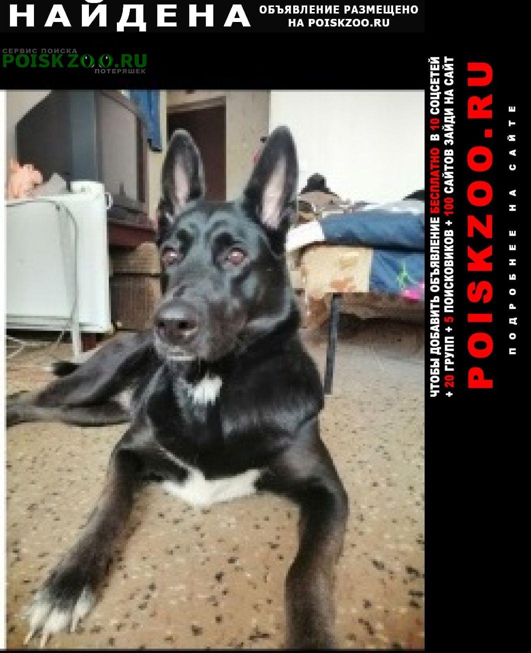 Найдена собака девочка Раменское