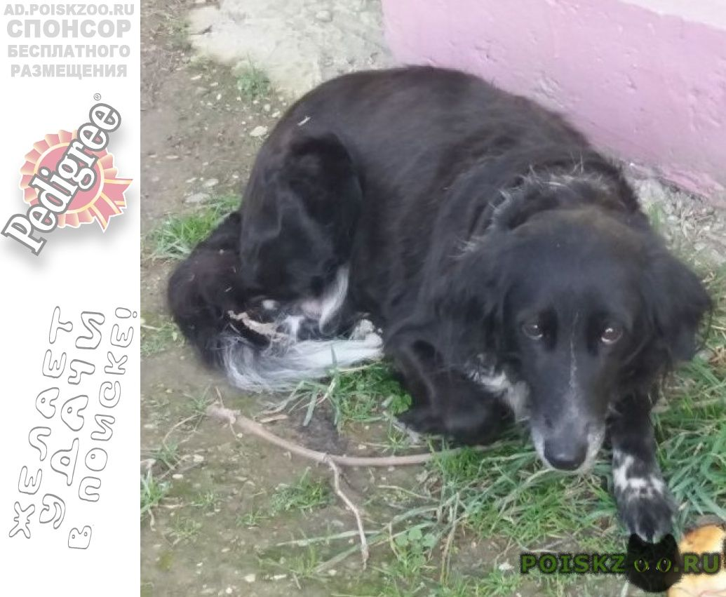 Найдена собака г.Новороссийск