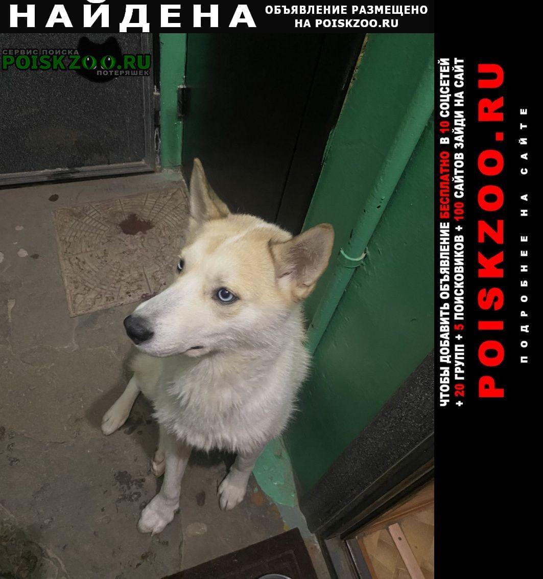 Найдена собака Дзержинск