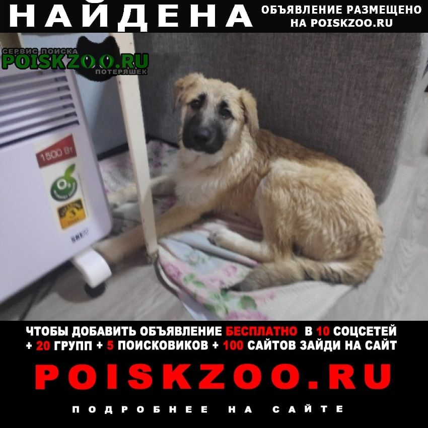 Найдена собака кобель Новочебоксарск