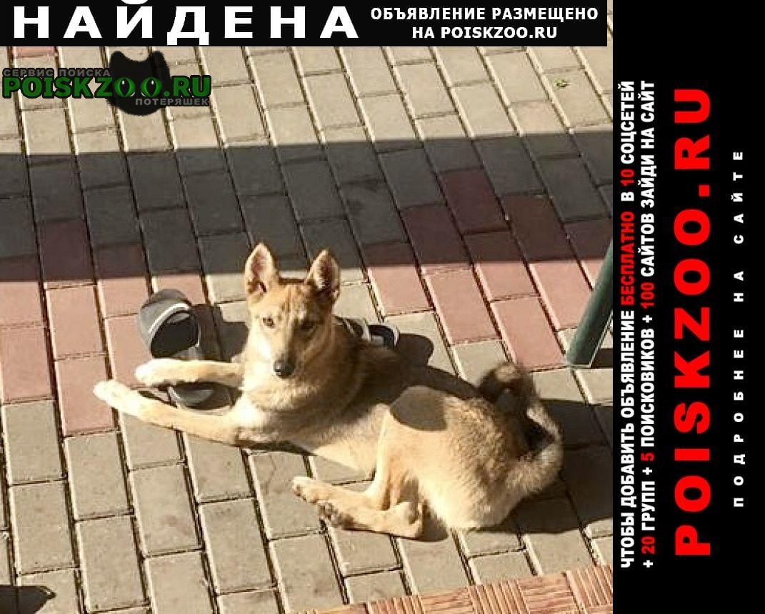 Найдена собака хозяева найдитесь Тамбов
