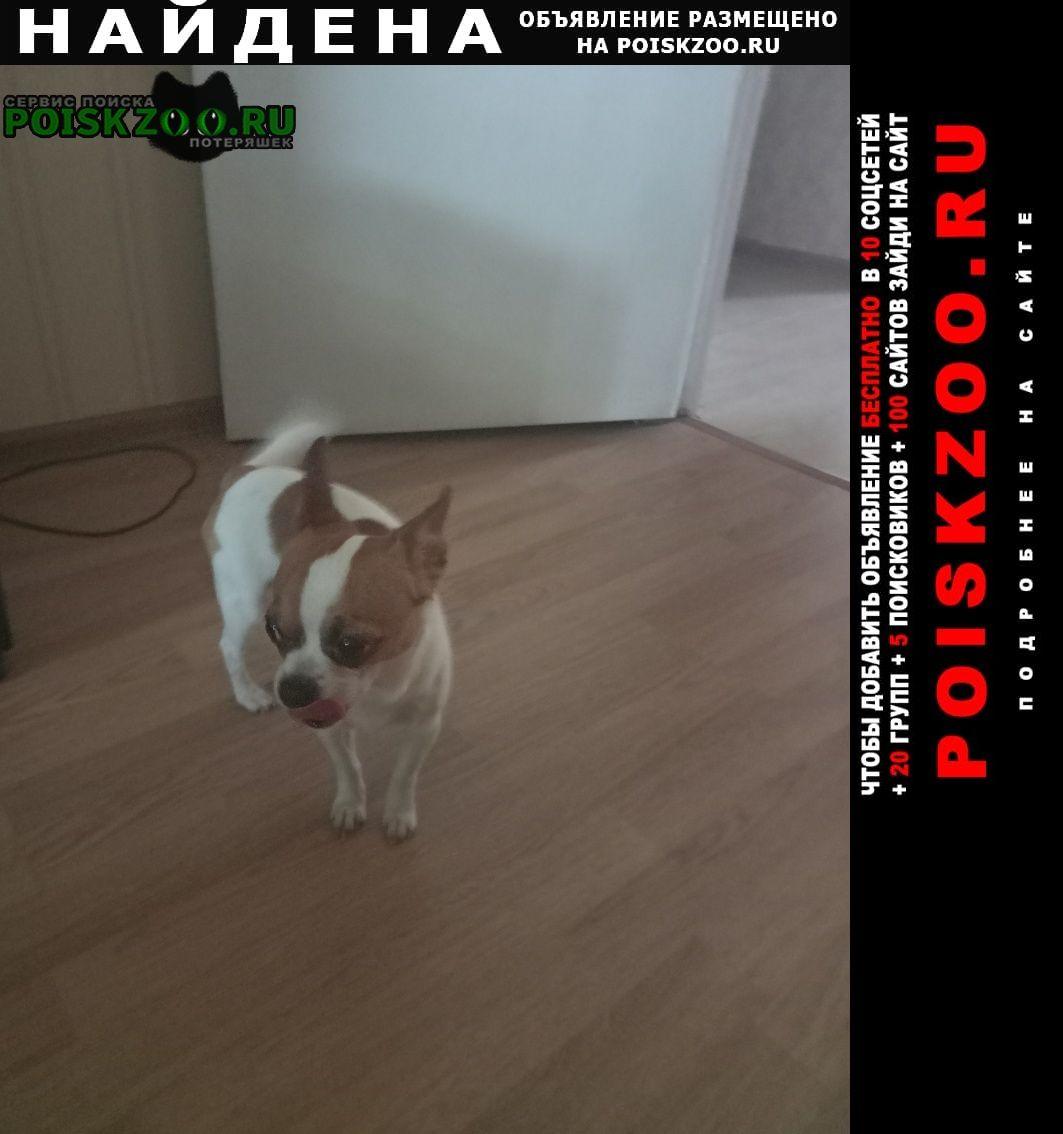Найдена собака кобель Шаховская