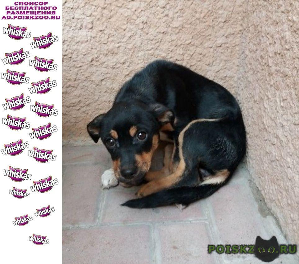 Найдена собака г.Симферополь