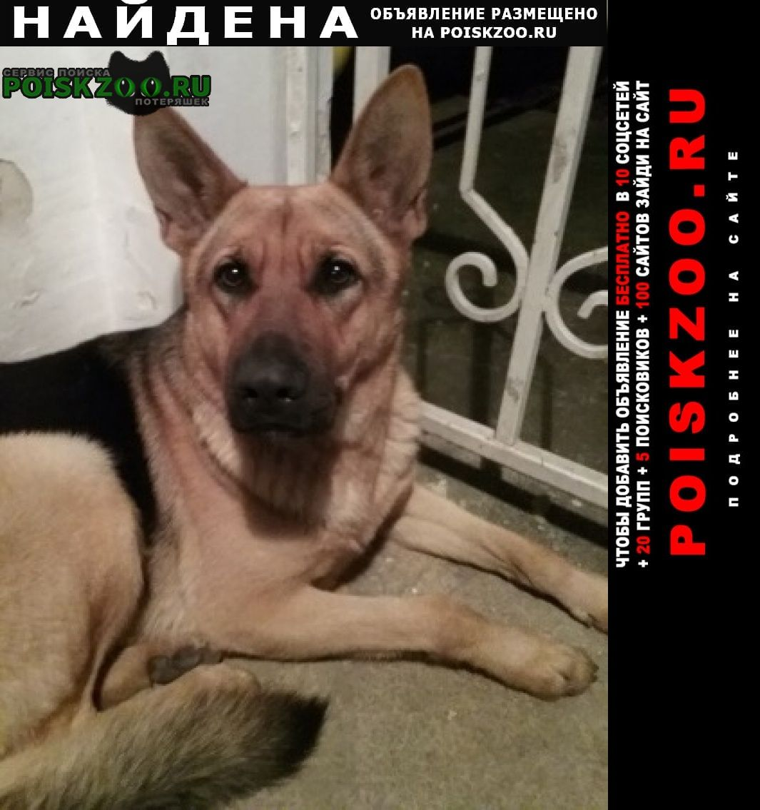 Найдена собака Туапсе