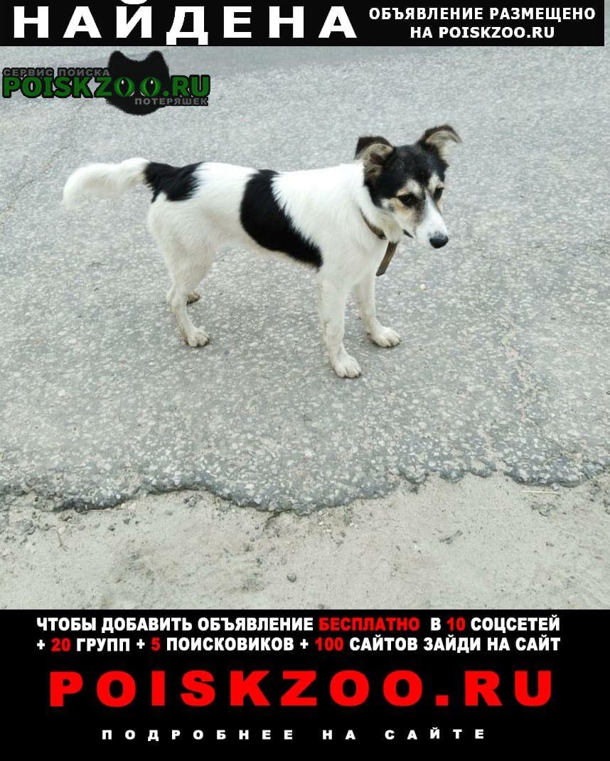 Найдена собака г.Михнево