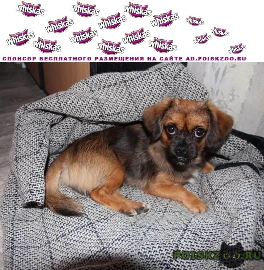 Найдена собака г.Муравленко