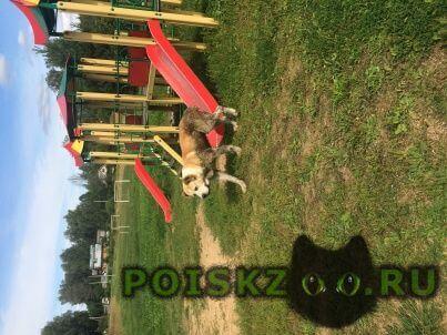 Найдена собака кобель г.Зеленоград