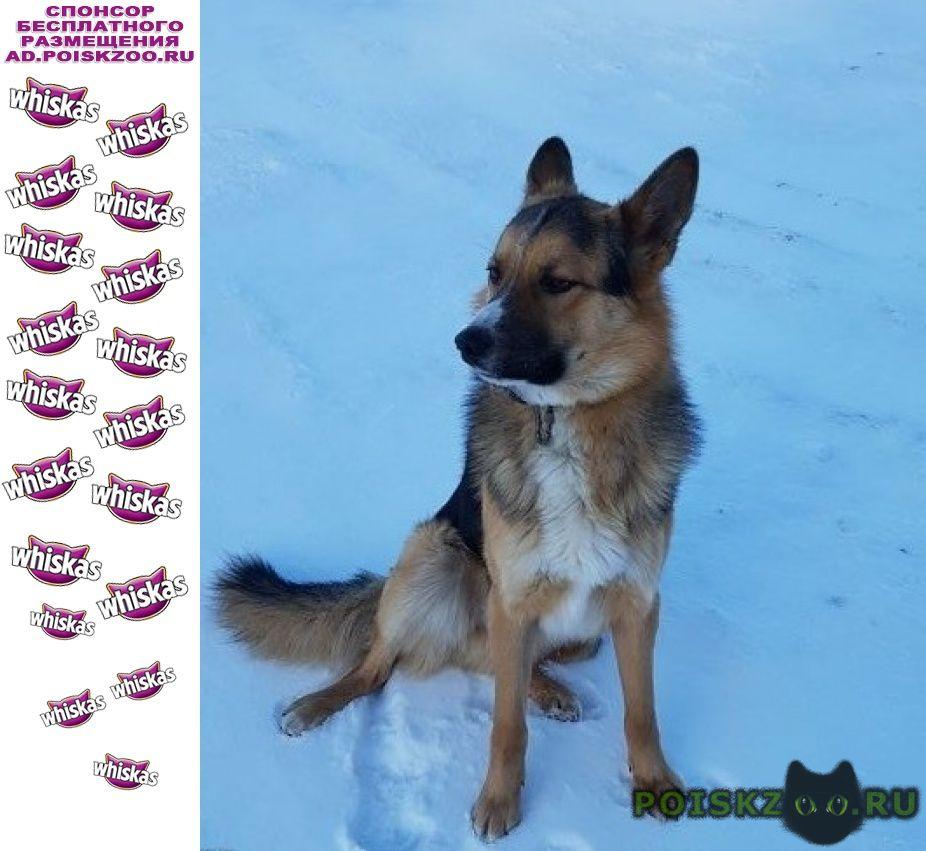 Найдена собака кобель чудо-пес  г.Дмитров