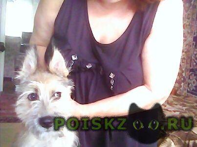 Найдена собака августа г.Нижний Новгород