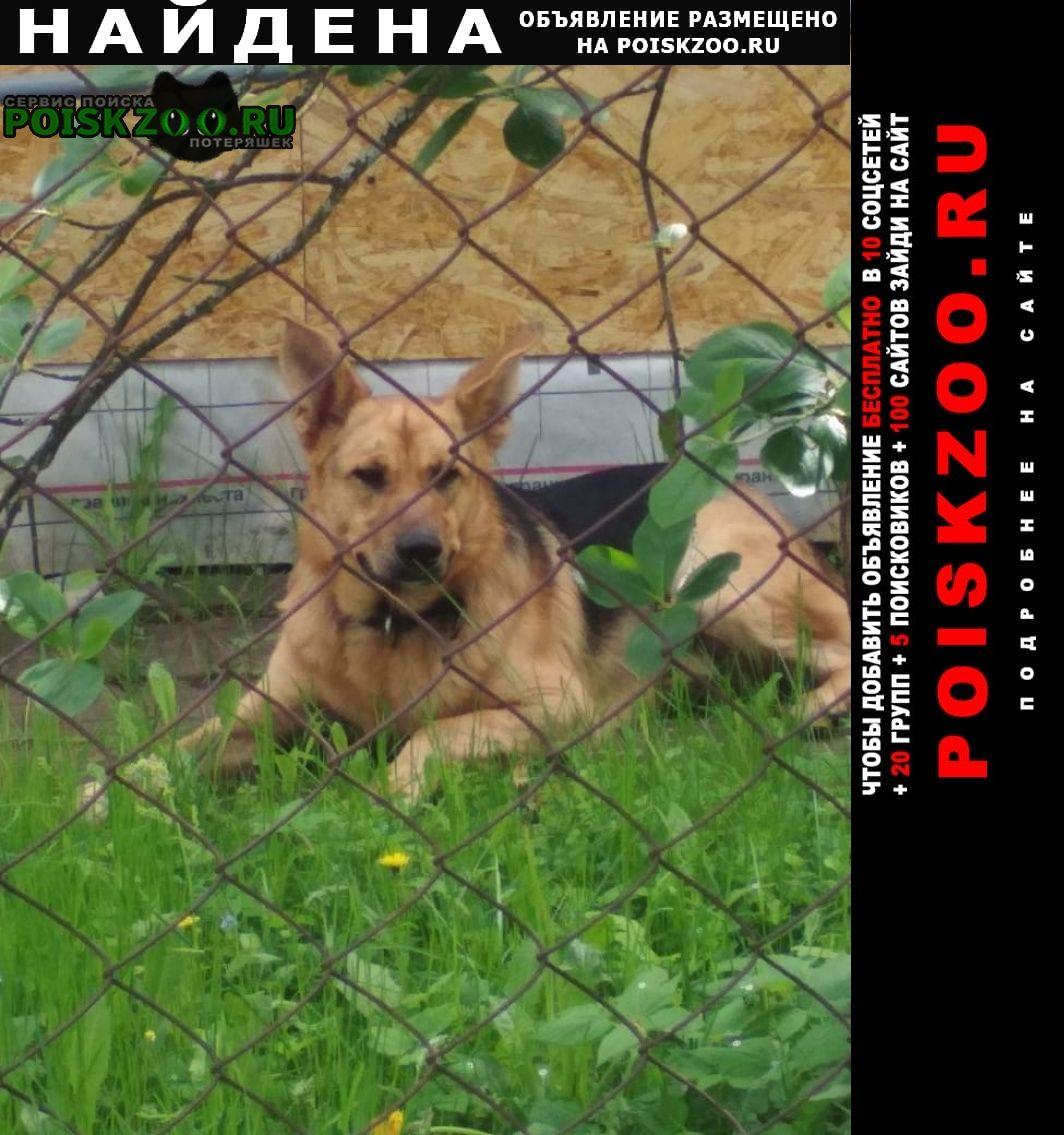 Найдена собака кобель Чехов