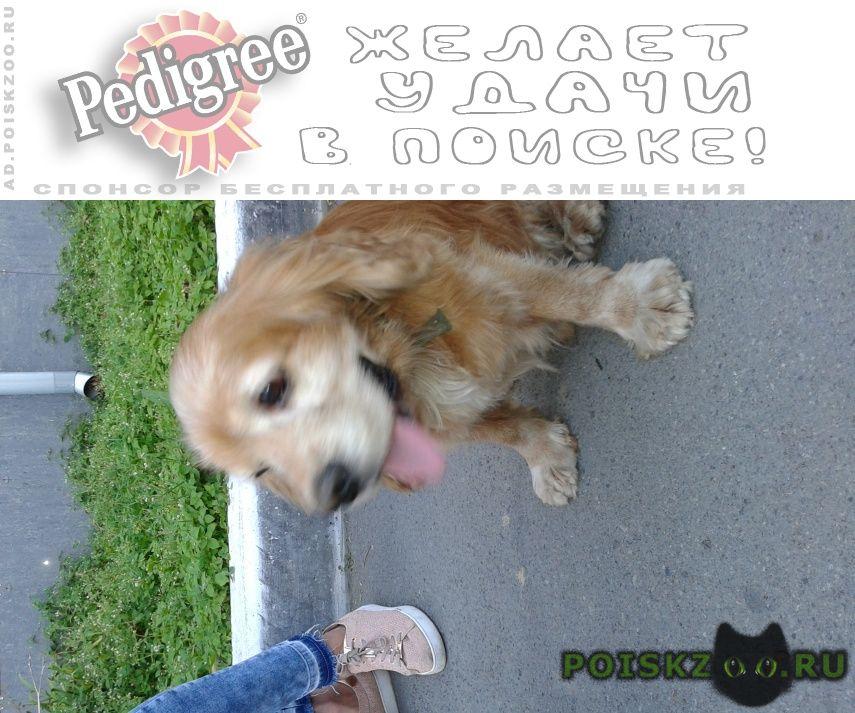 Найдена собака кобель на эгершельде г.Владивосток