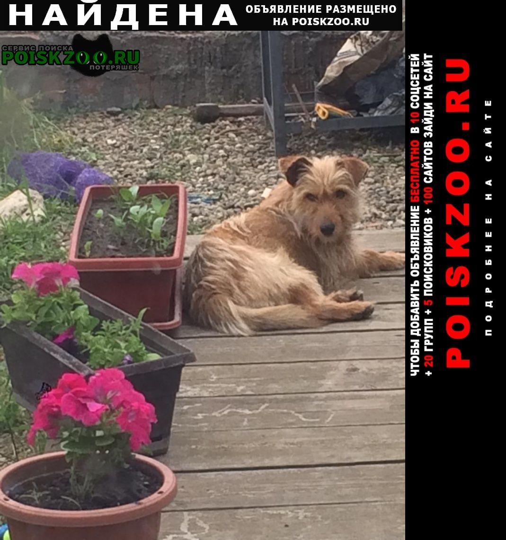 Найдена собака рыженькая, маленькая Афипский