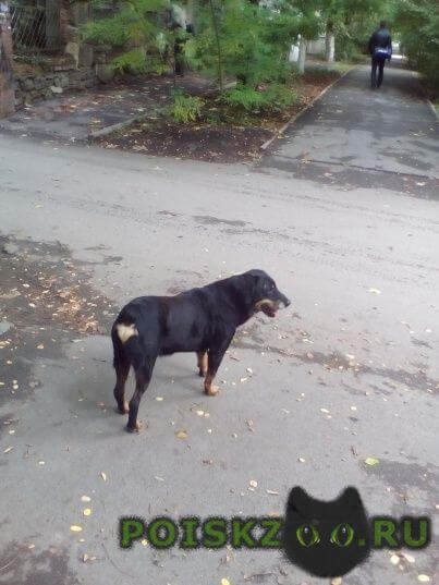 Найдена собака кобель бегает собака, ищет хозяина, без ошейника. г.Ростов-на-Дону