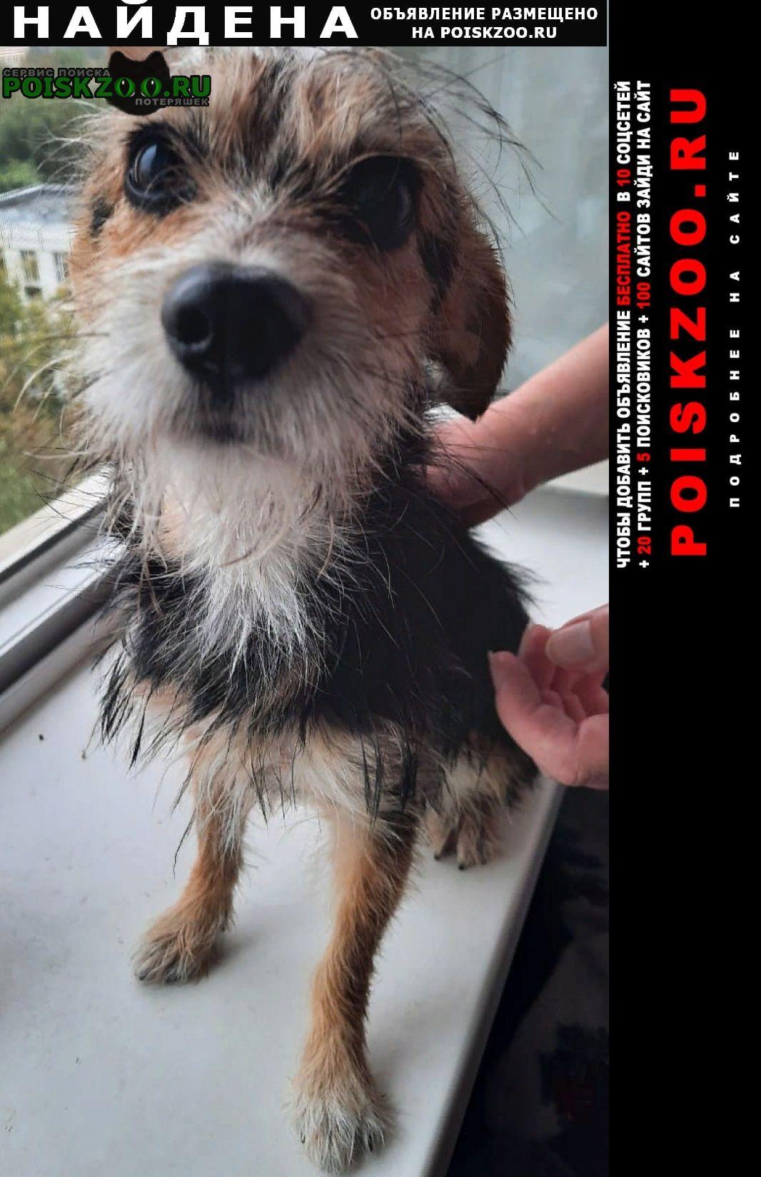 Найдена собака 26.08 кобель метис йорка Москва