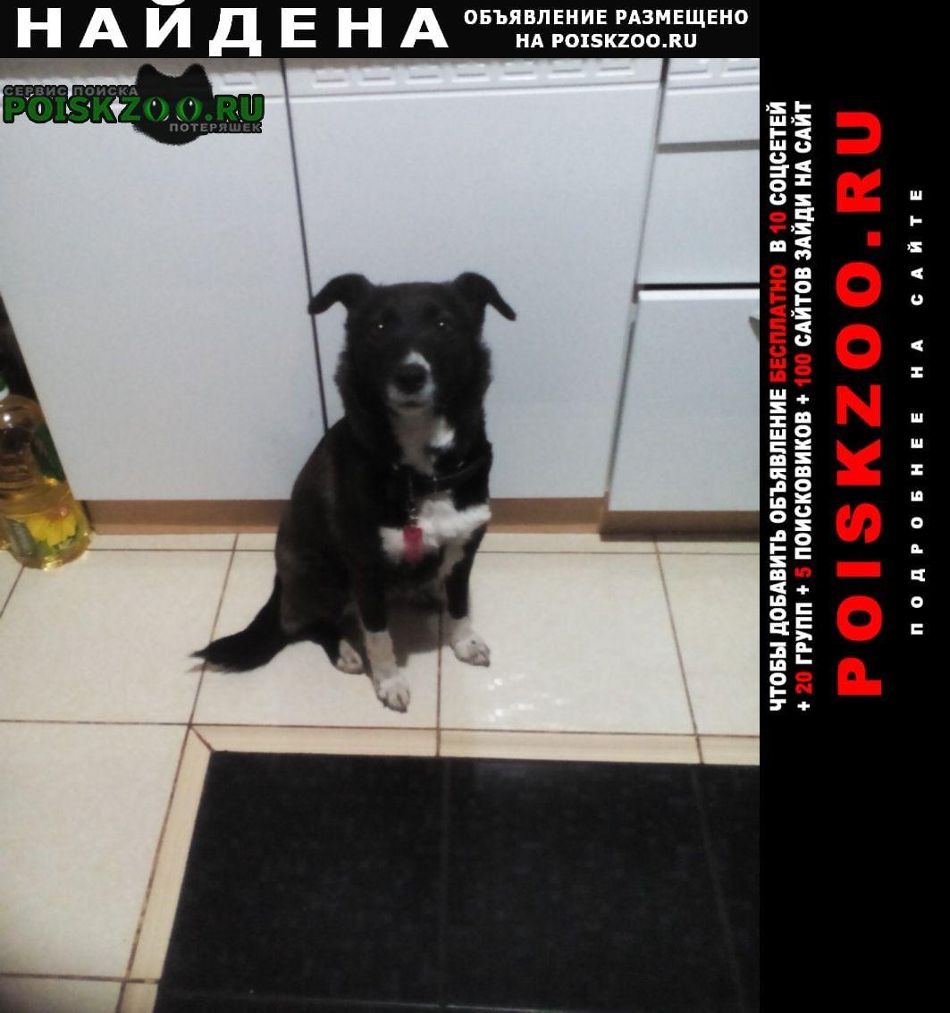 Найдена собака дворняжка с ошейником Иваново