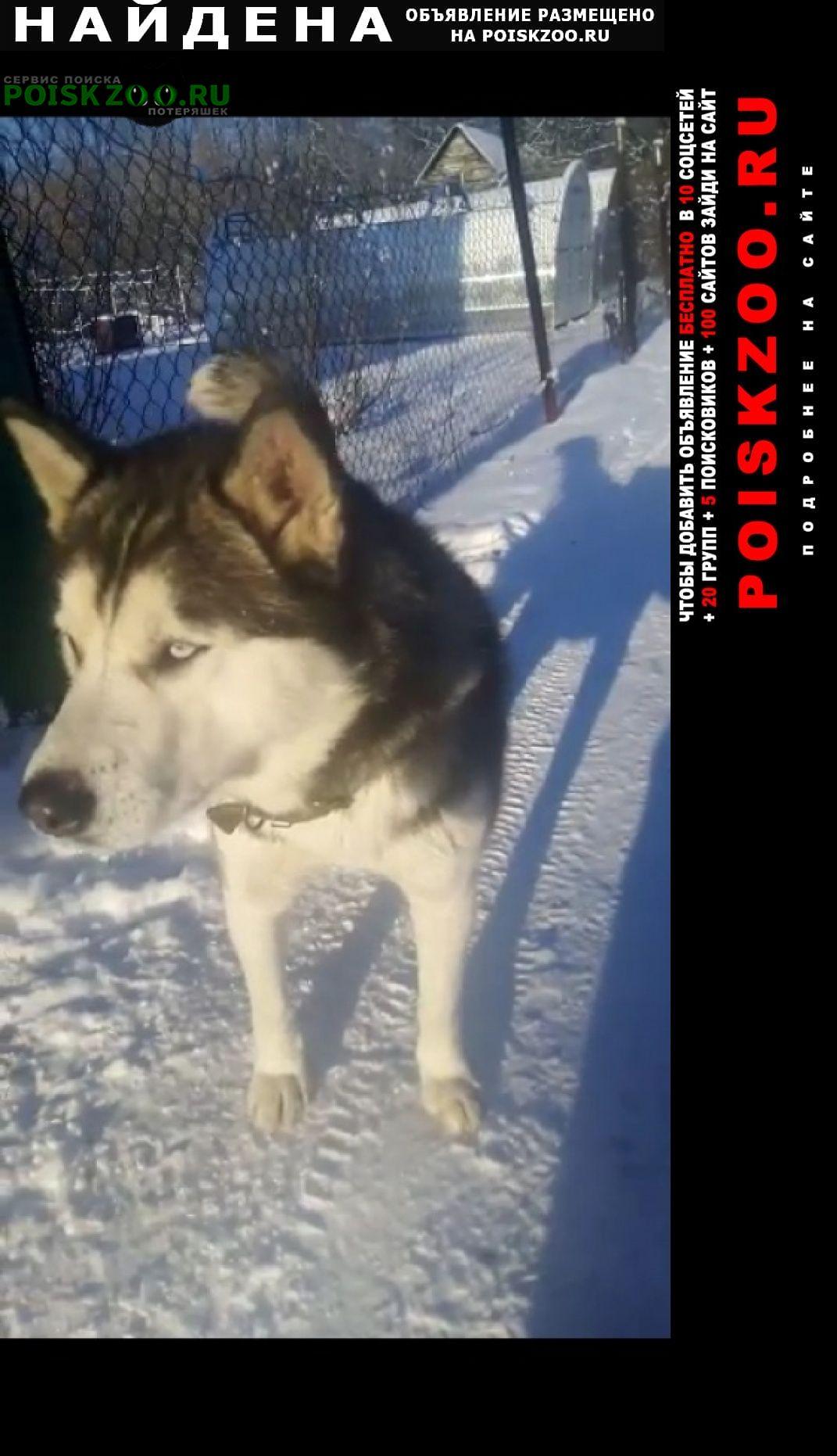 Найдена собака хаски Уфа