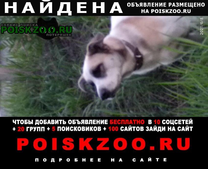 Найдена собака срочно Братск