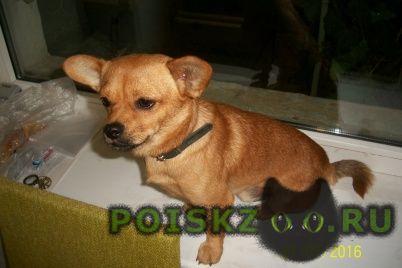 Найдена собака кобель г.Севастополь