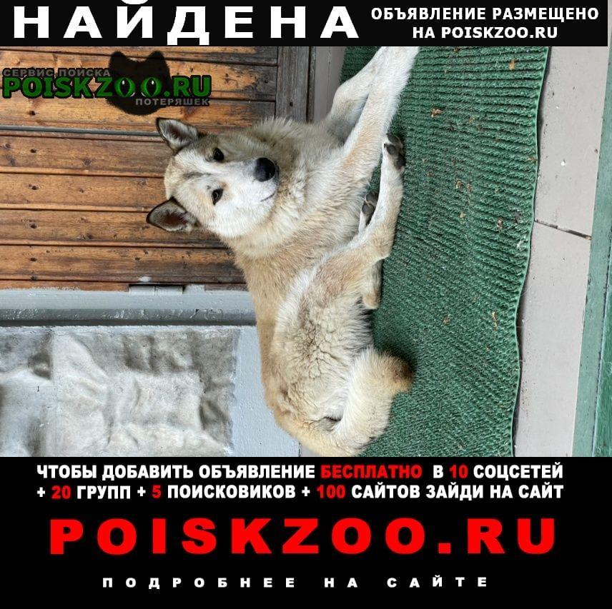 Долгопрудный Найдена собака кобель уже в москве