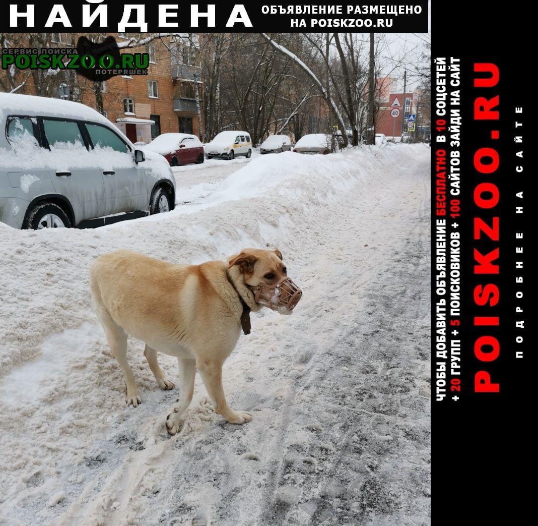 Найдена собака в наморднике Мытищи