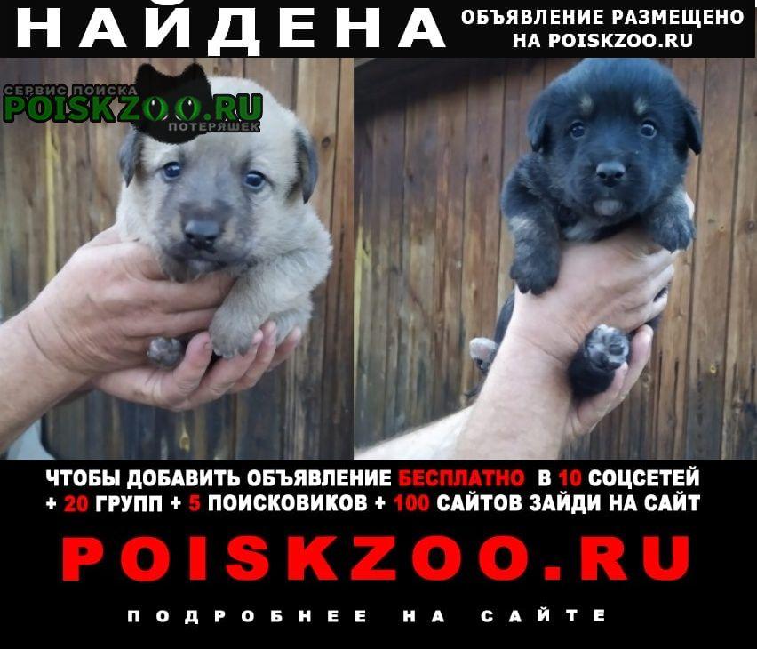 Найдена собака кобель щенки Уфа