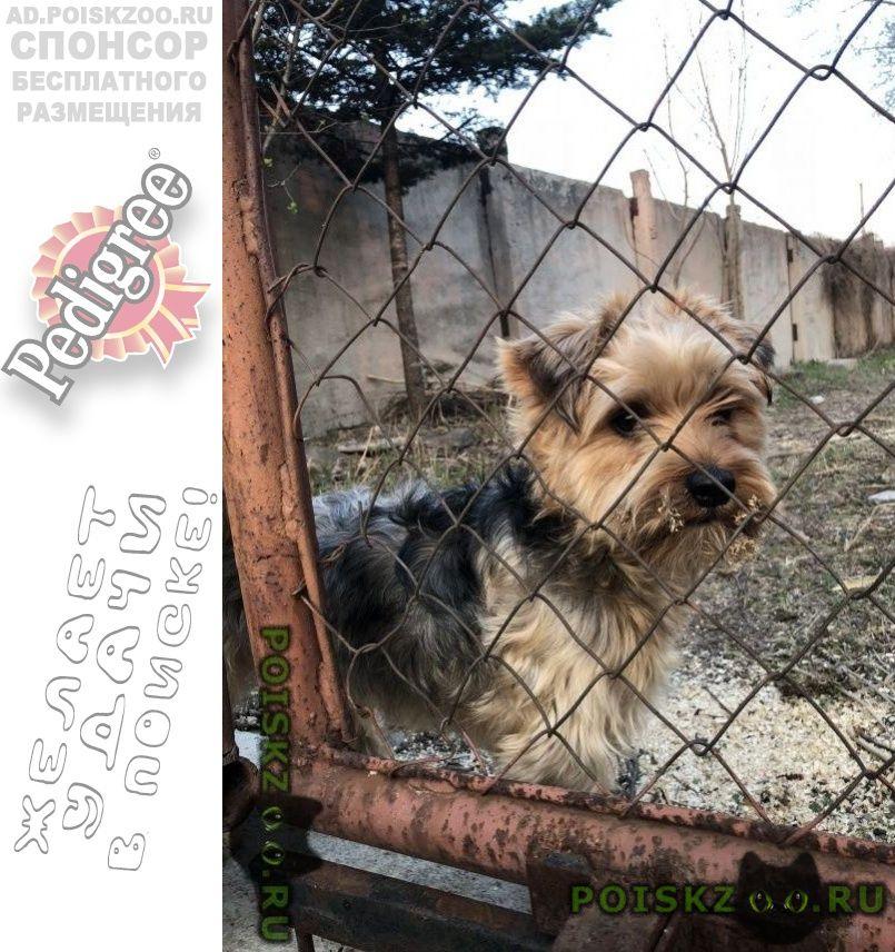 Найдена собака кобель г.Владивосток