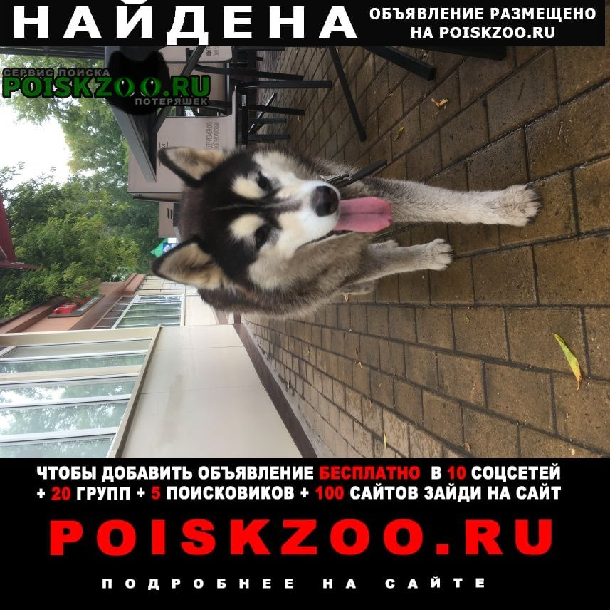 Найдена собака Саранск