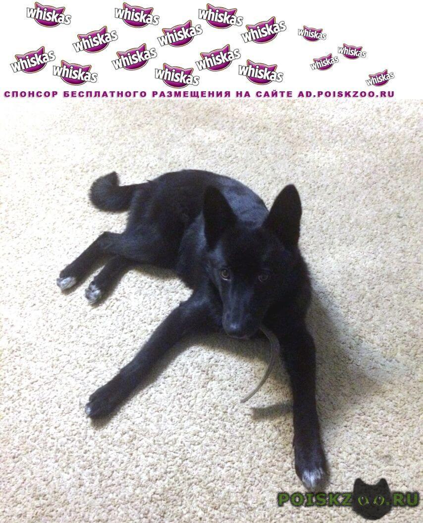 Найдена собака заберите собачку в добрые руки  г.Саранск