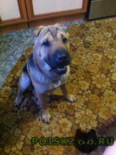 Найдена собака г.Черногорск