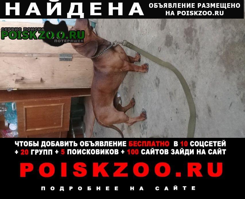 Найдена собака такса кабель Афипский