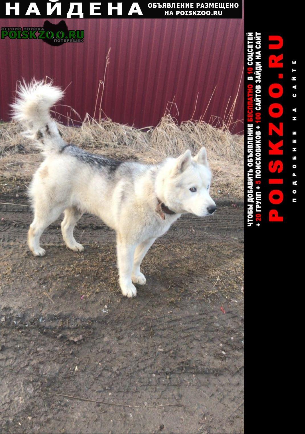 Найдена собака Воскресенск