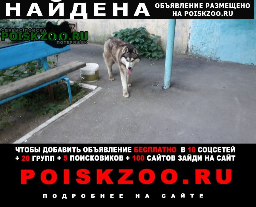 Найдена собака кобель в комсомольском районе Саратов