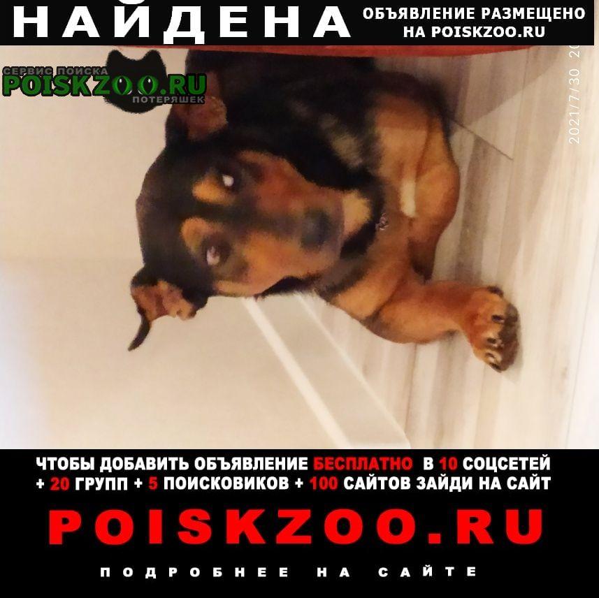 Найдена собака кобель ищу старых или новых хозяев Москва