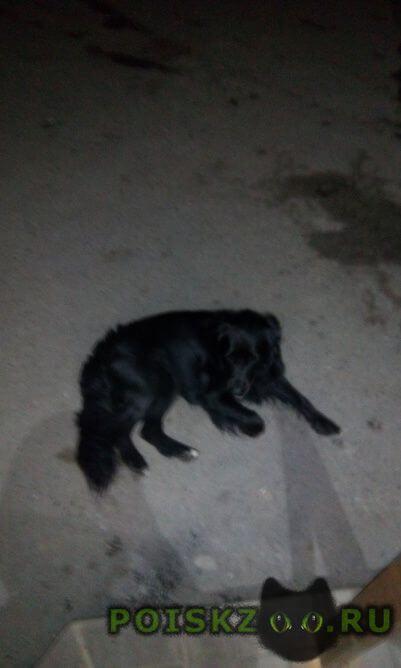 Найдена собака г.Владивосток