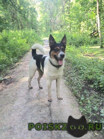 Найдена собака кобель г.Одинцово