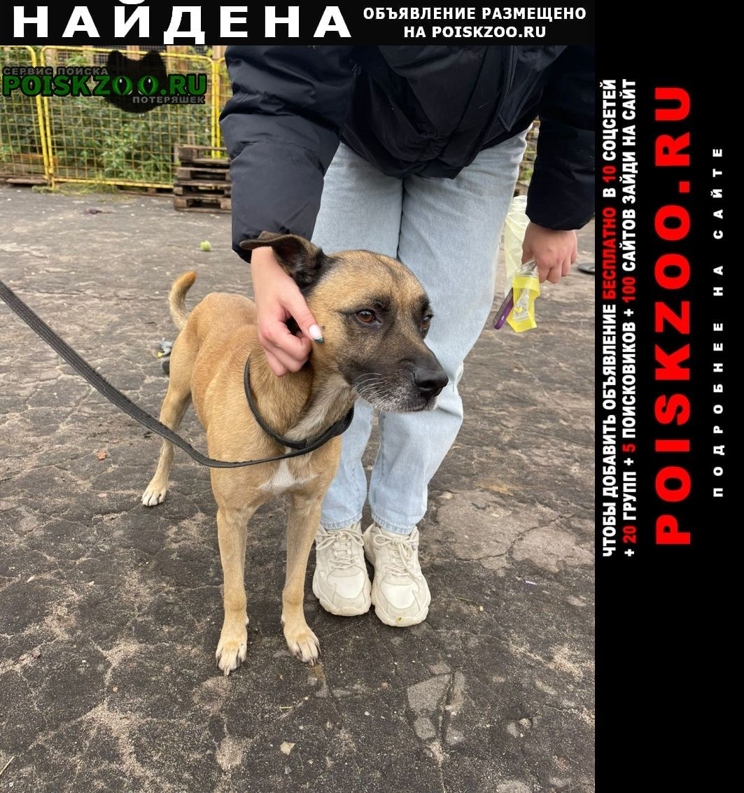 Найдена собака кобель Балашиха