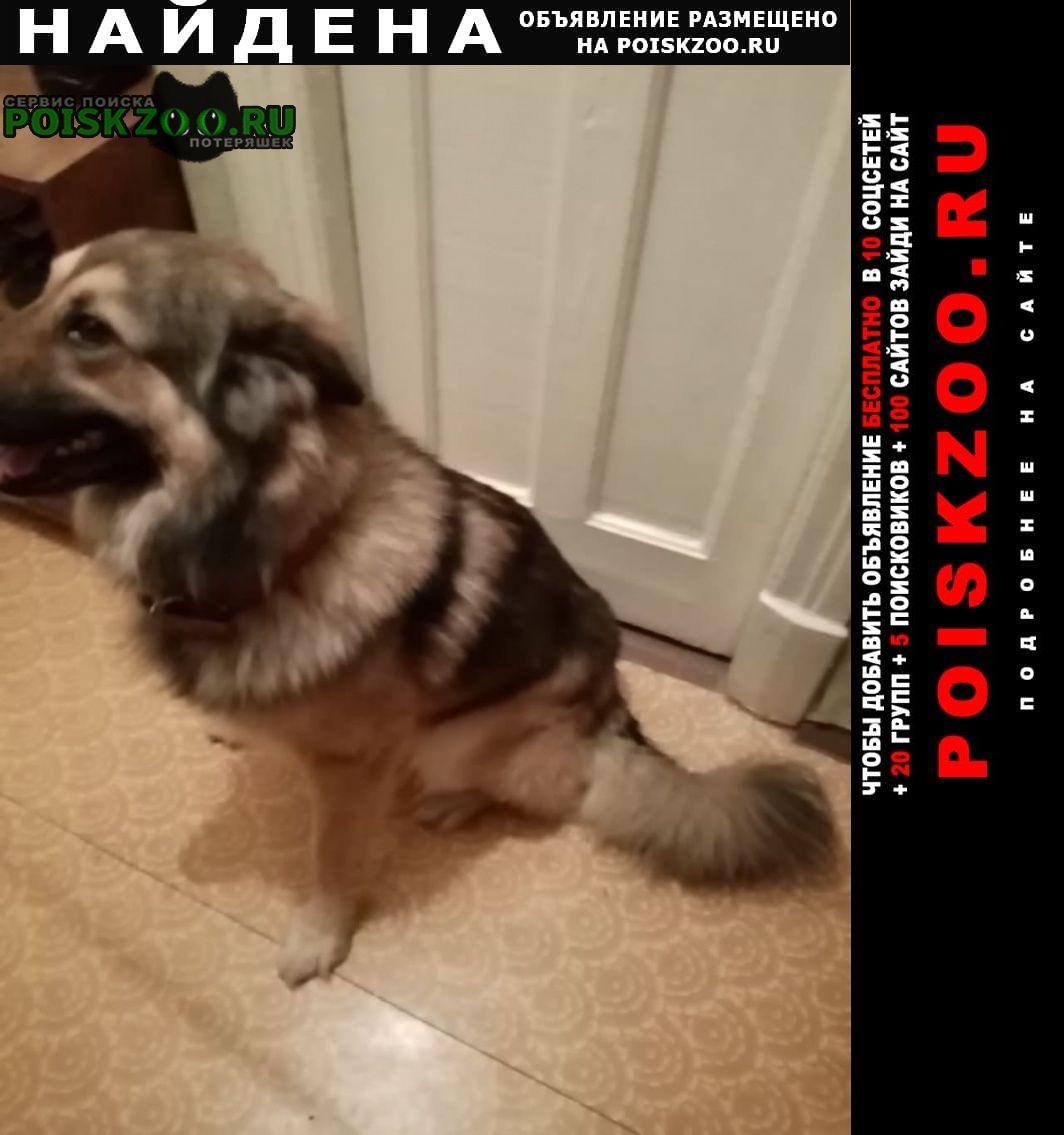 Найдена собака кобель Москва