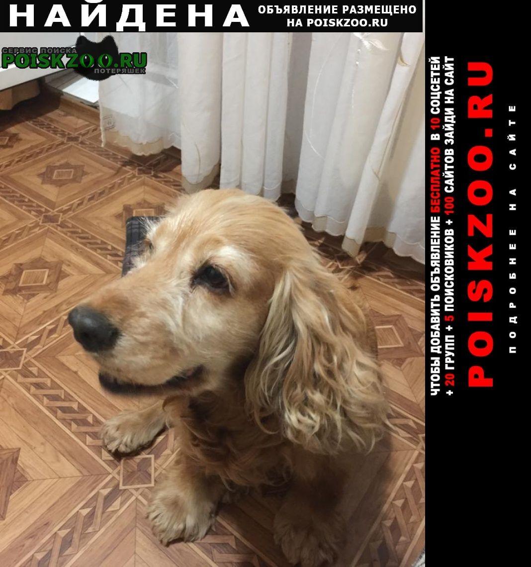 Найдена собака дрессированная и ухоженная Ейск