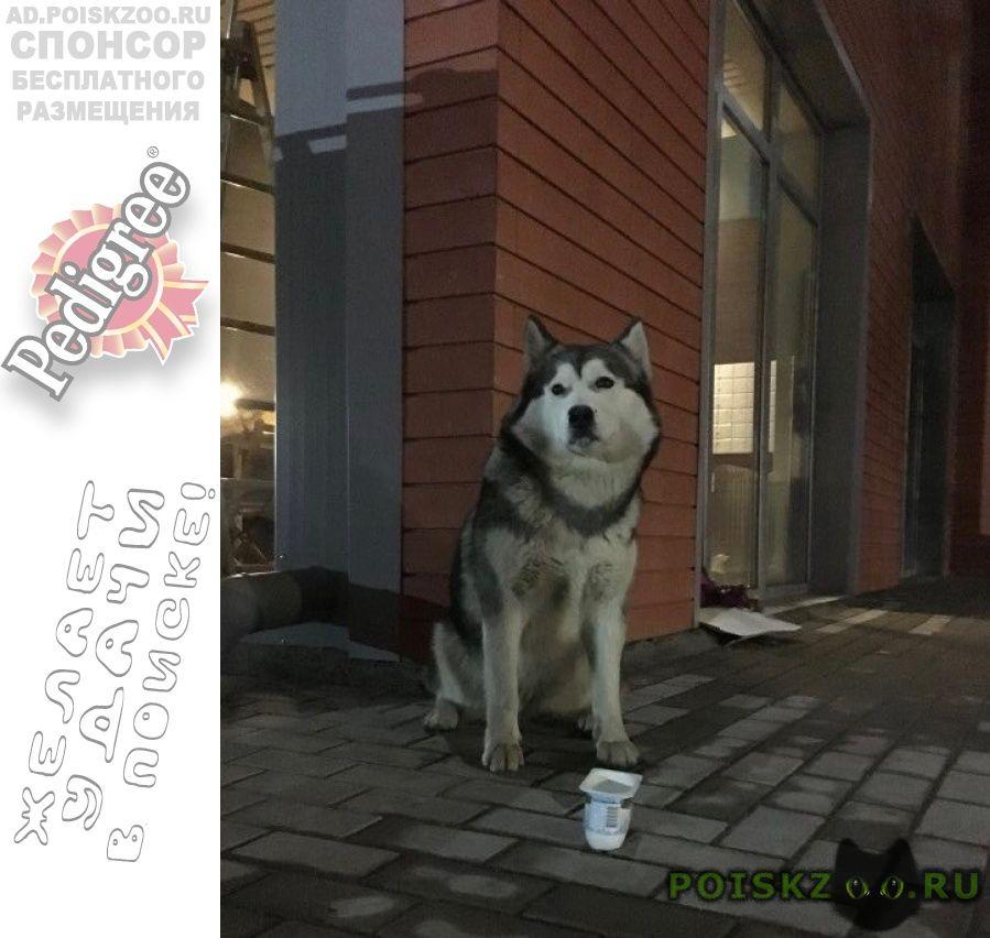 Найдена собака г.Щелково