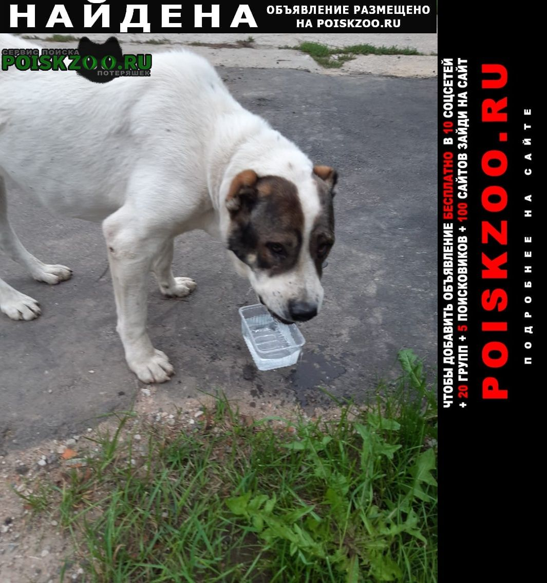 Найдена собака кобель алабай. Домодедово