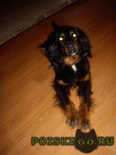 Найдена собака г.Иваново