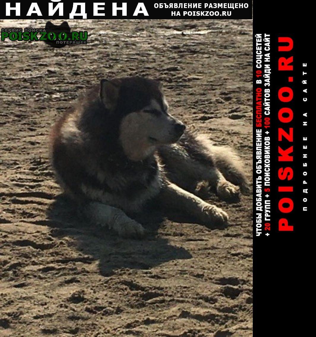 Ступино Найдена собака кобель на пляже на оке в районе