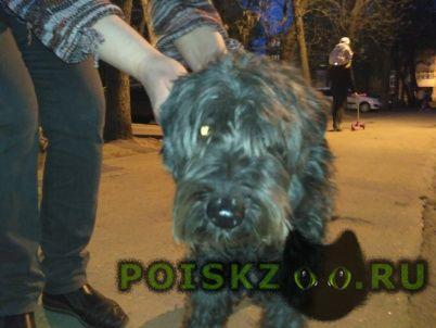 Найдена собака кобель ( ) г.Нижний Новгород