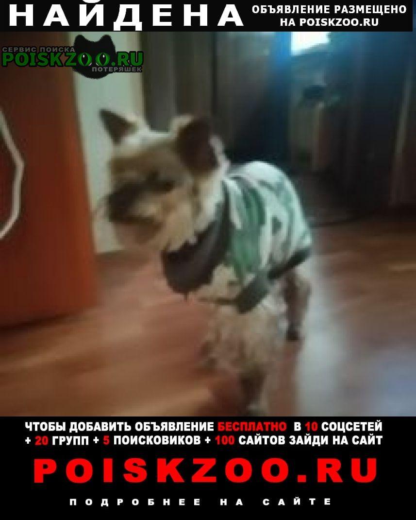 Найдена собака 22.05.район солнцево г.Москва