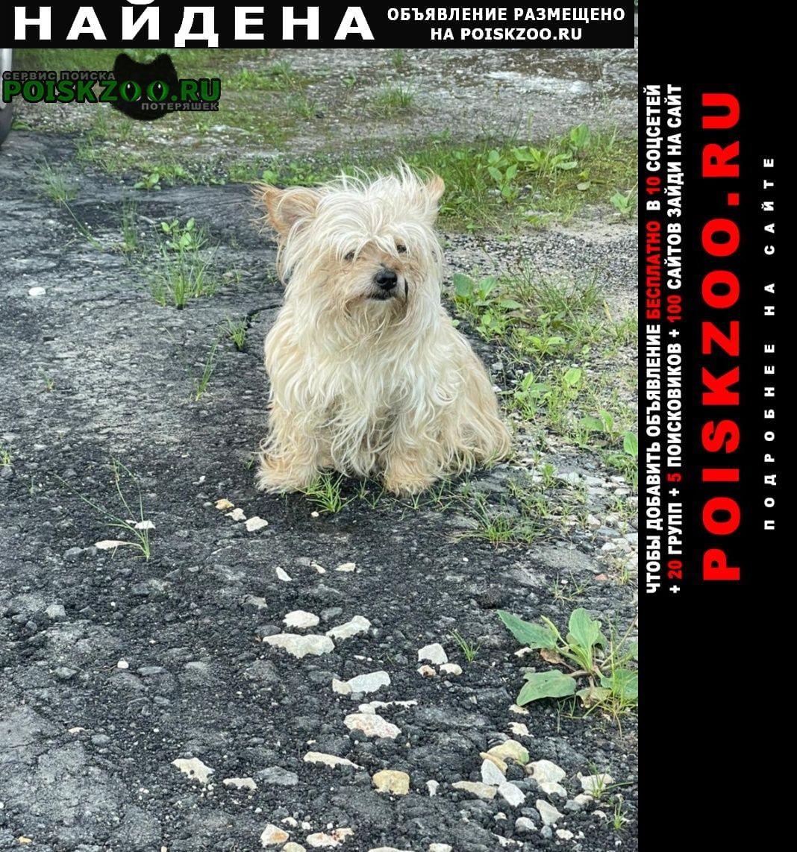 Найдена собака видели в районе липки юзао москвы Москва