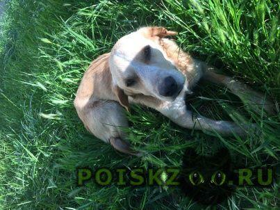 Найдена собака кобель г.Адлер