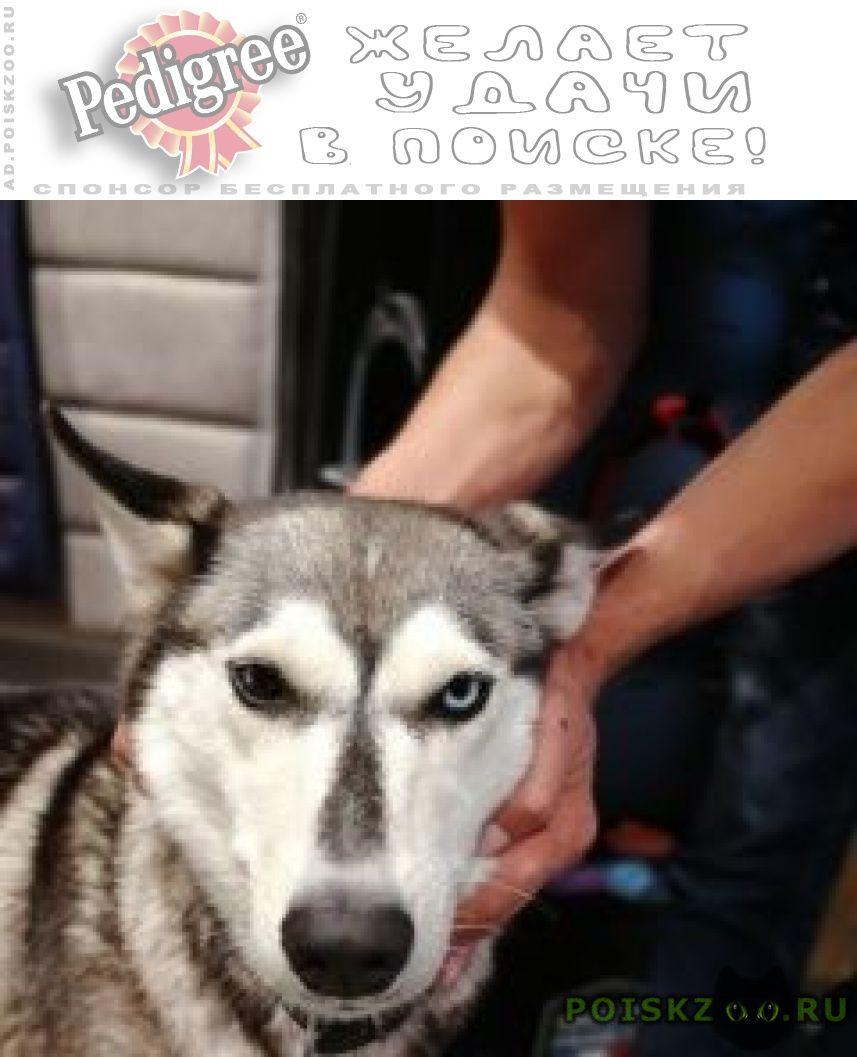 Найдена собака, бутово г.Москва