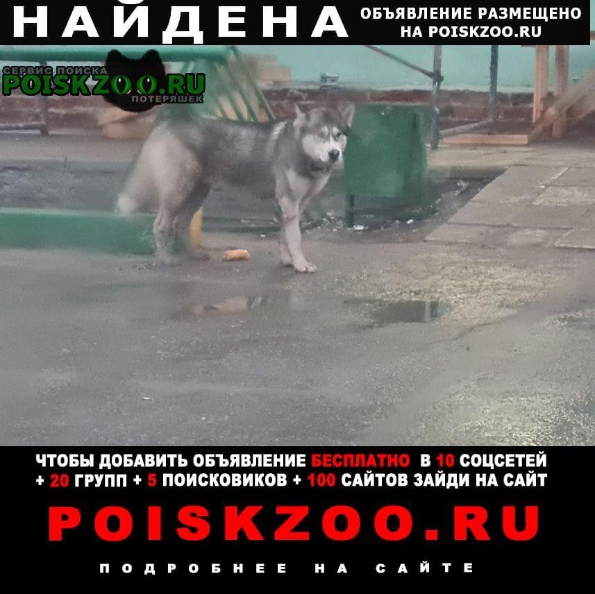 Найдена собака замечена Пушкино