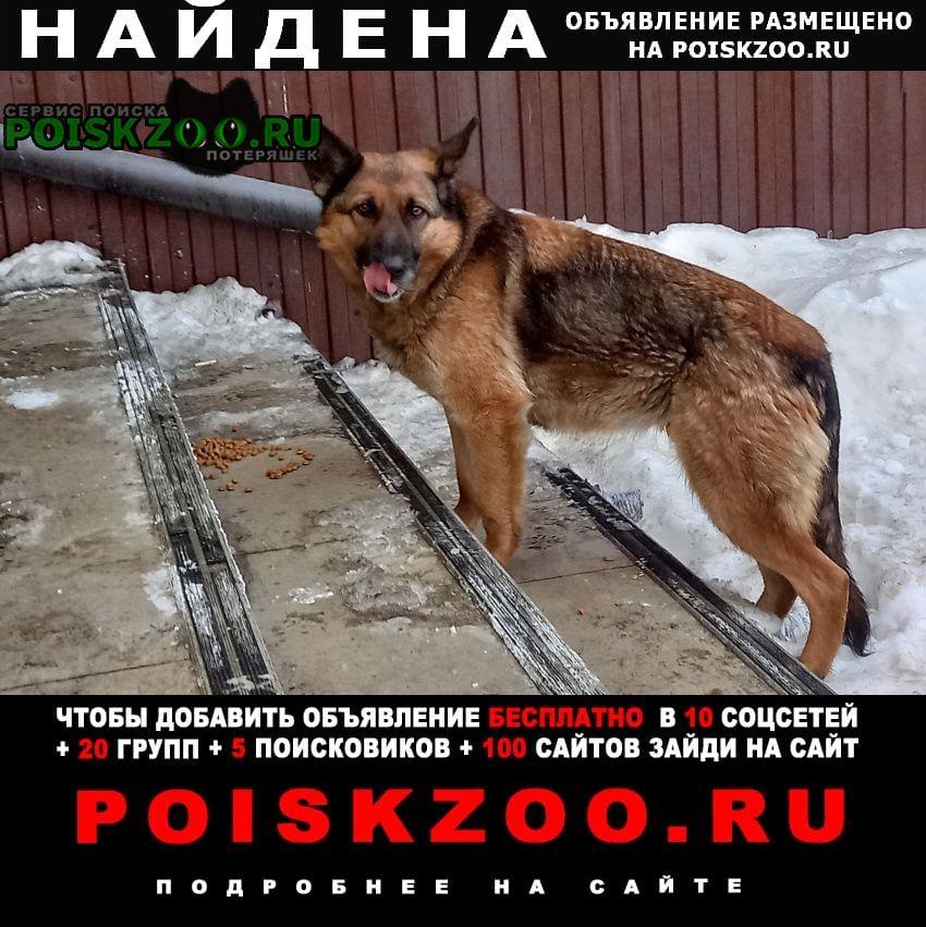Найдена собака Владивосток